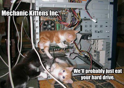 wa-chubble-is-dis:  Mechanic kittens inc