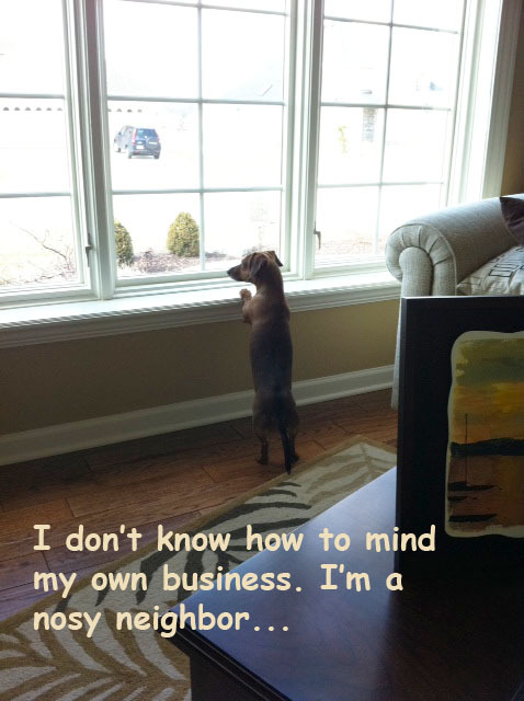 dogshaming:  This is Millie  I don't know how to mind my own business. I'm a nosy neighbor …  View Post shared via WordPress.com