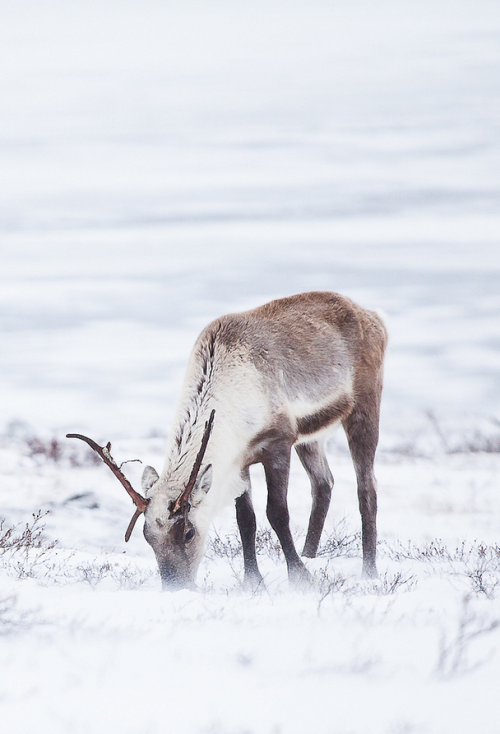 daisydip:  The Winter Walker (by davebrosha).