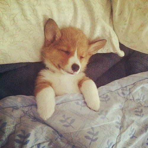 Sleepy puppy.