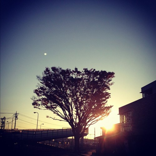 #nov #20th #japan #morning #tokyo #sky #sun #blue #orenge #tree