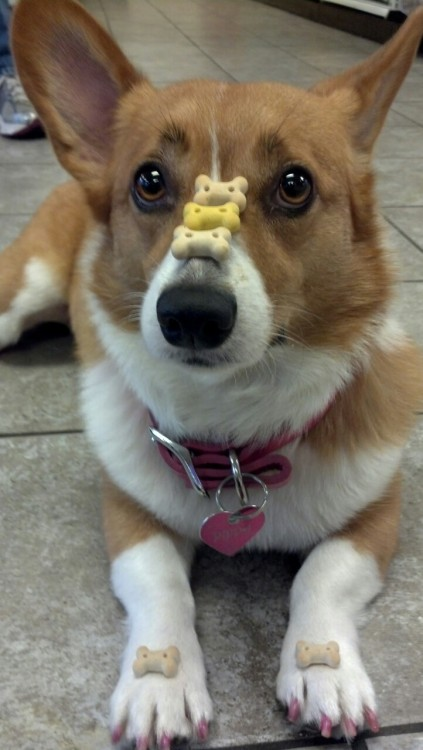 pippipcheeriocorgi:  Level up!