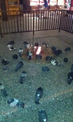 pigeonsatan:   pottersandtheirredheads:   THE PIGEONS ARE ALL GATHERED AROUND THIS FIRE I THINK I'VE COME UPON A PIGEON CULT SACRIFICING CEREMONY AND I'M TERRIFIED SEND HELP   *leans in to tumblr user pottersandheirredhead* hello friend welcome to the ceremony