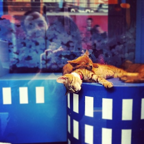 Let's just say, I live for this time of year. (at sfspca window at macy's)