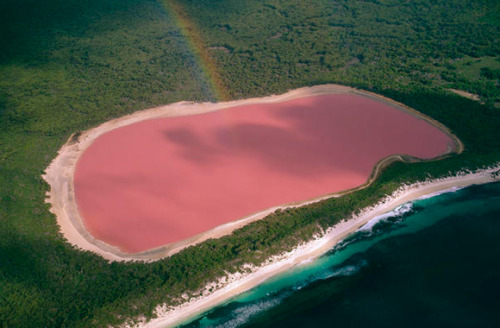 i-keep-the-wolf-from-the-door:  Pink Lake, Western Australia