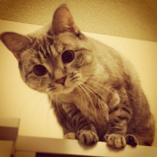 nala_cat:  Hello there !! http://instagr.am/p/SPbodQLC7V/