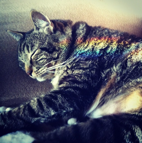 Zoo Zoo the Cat, Looking Like Nyan Cat