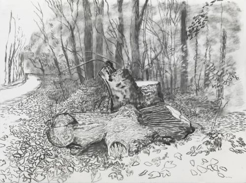 David Hockney made a tree stump famous in his painting Winter Timber. This month, it has been vandalised. Here is an exclusive new sketch of the damaged stump. Click on the image for Hockney's thoughts …