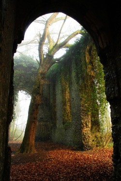 trees orange green fall Magic forest autumn leaves mystical arch Ivy ruins