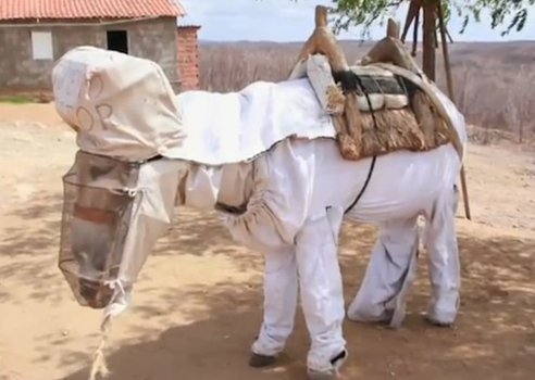 Yes, this is a beekeeping donkey! Watch the video of him walking in this custom suit. Beekeeping Donkey is a Honey Farmer's Best Friend