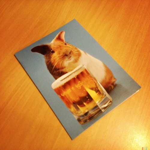 Guinea Pig Bday Card • Best card EVER!! #birthday #card #guineapig #goodfriends