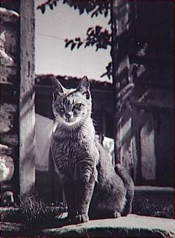 Le chat d'thènes by Brassaï, 1953