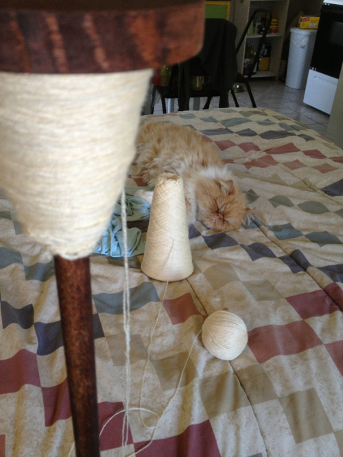 I guess my spinning isn't that entertaining for my cat.