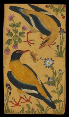 indigodreams:  petitcabinetdecuriosites: (via Birds&Plants / Two Orioles, North India, Mughal, 1610)