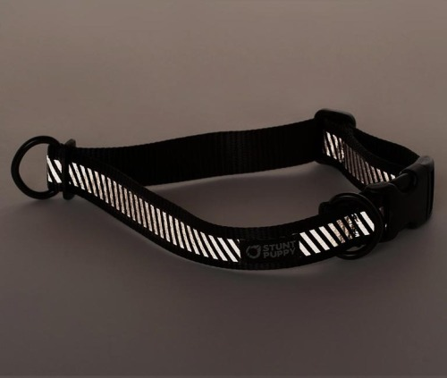 Stunt Puppy Go Do Glo Collar. The canine equivalent of a BFF bracelet.