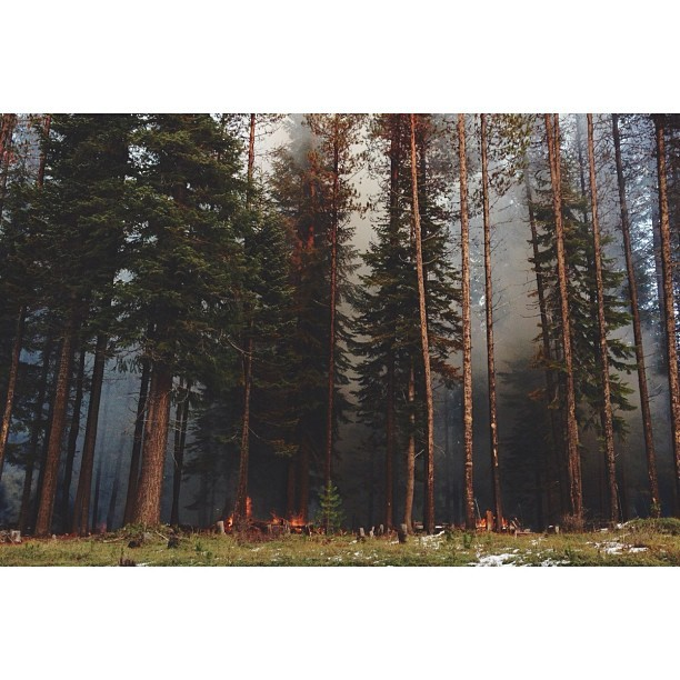 grizzzwald:  kevinruss:  at Umpqua National Forest  Let's make a movie here.