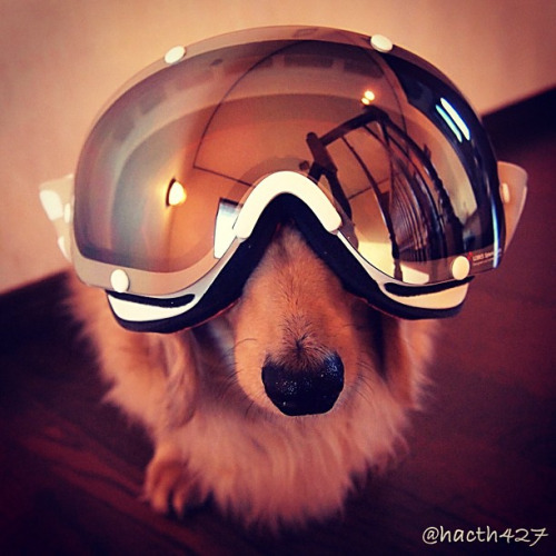 Ground Control to Major Dog Iver. Ground Control to Major Dog Iver. Take Your Protein Pills and Put Your Helmet On.