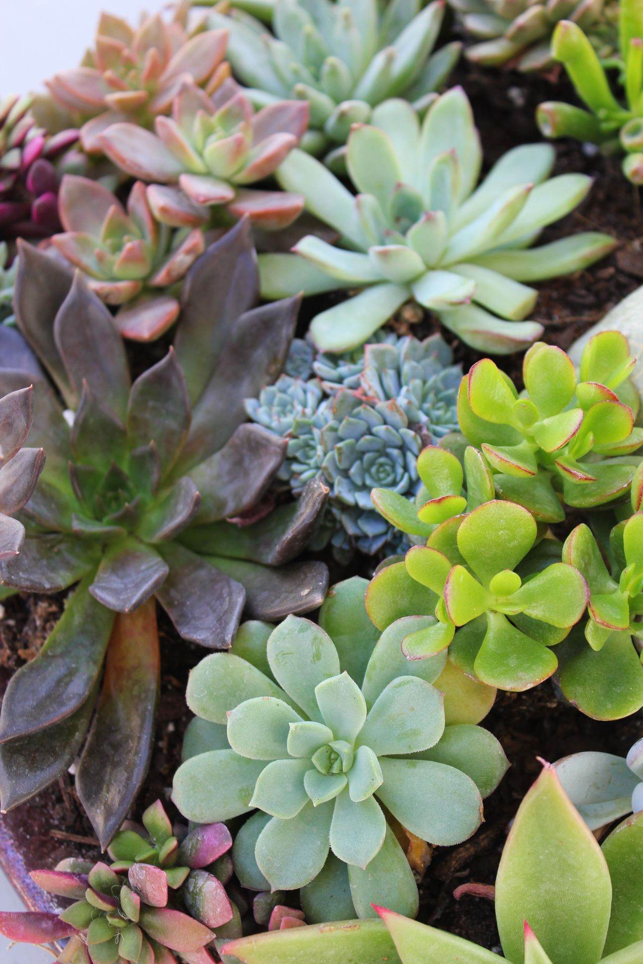 loveisallthingsmaroon:  Amazing succulents I saw at the green market.