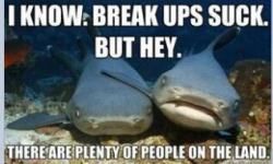 #shark #breakups
