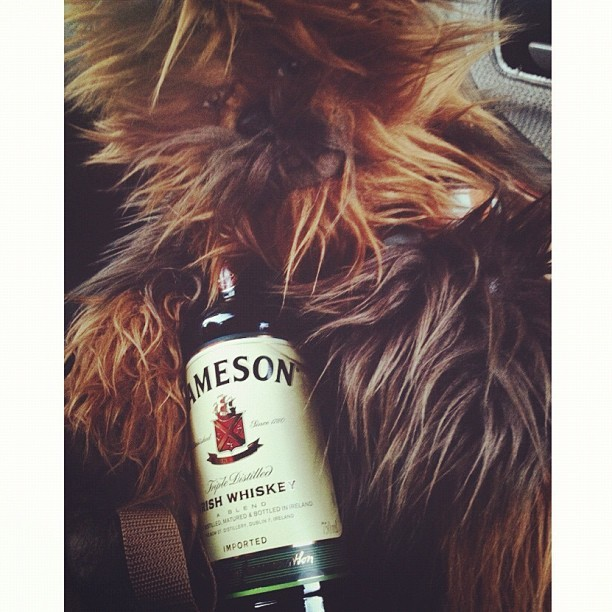 Dland bound 😏 #jameson  (at 91 Freeway West)