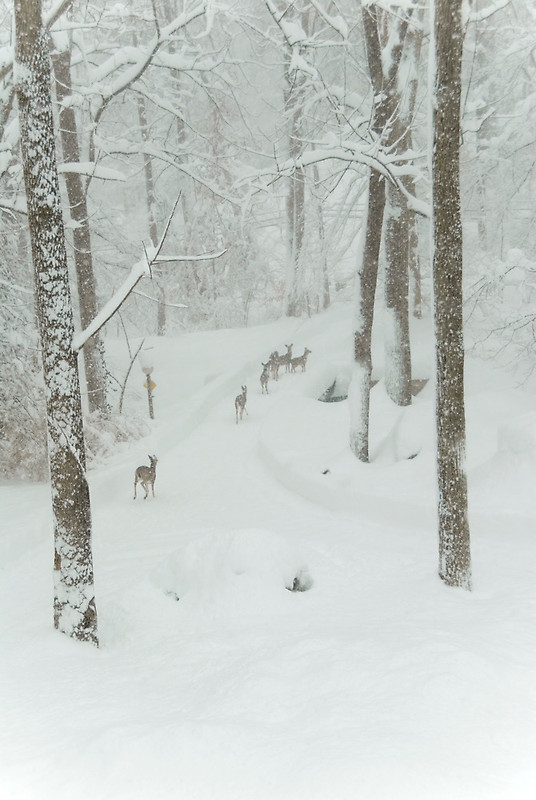 Pretty deer winter is here!