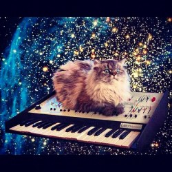 Lucy in the sky with diamonds #cat #kitty #space #stars #keyboard #lol