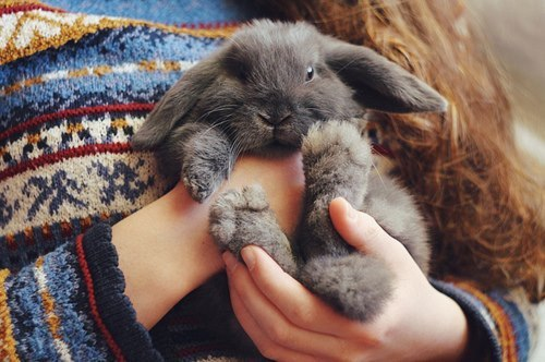 A sweater and a fluffy bunny is all I want right now….