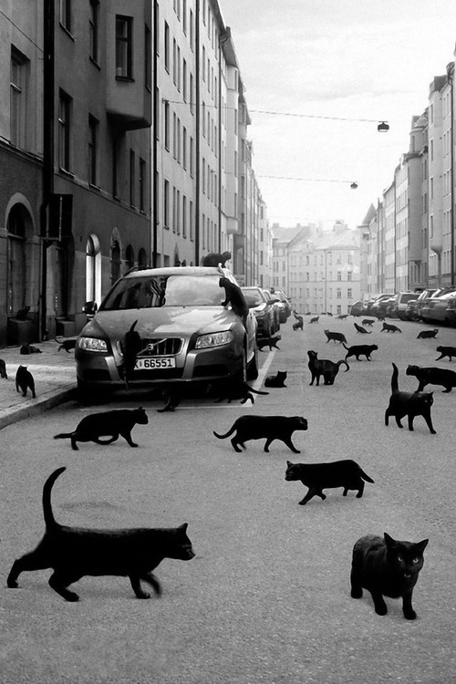 cats. everywhere.