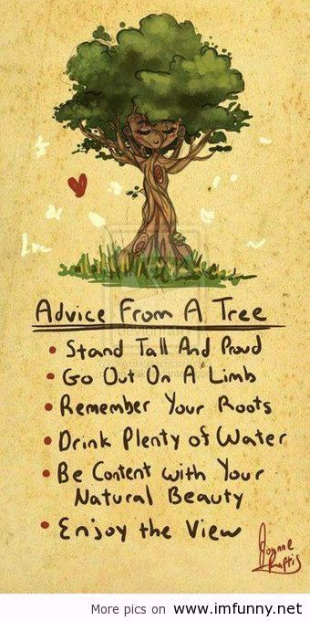 xcheeremox:  Advice from a tree | Funny Pictures, Funny Quotes – Photos, Quotes, Images, Pics on We Heart It. http://weheartit.com/entry/43939602