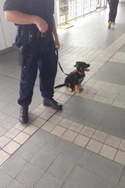 """one day, I'll be a big police dog!"""