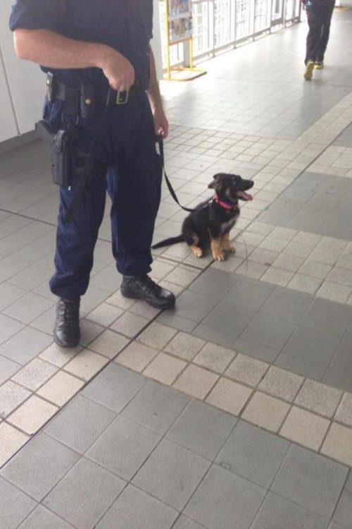 "missr91:  vans-supreme:  ""one day, I'll be a big police dog!""  forever reblog. and now because of that caption hahaha"