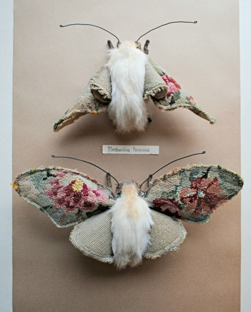 ohmisterfinch:  Textile moths By Mister Finch