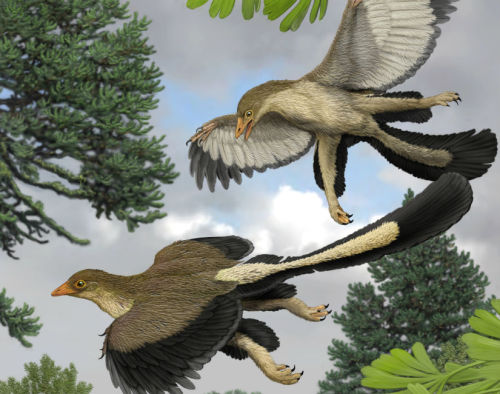 "Birds Descended from Gliding Dinosaurs:  ""The oldest known feathered dinosaurs would be Anchiornis (155 million years ago) and Epidexipteryx (between 152 million and 168 million years ago),"" Yale University paleontologist Nicholas Longrich told Discovery News. ""Feathers seem to have appeared initially for insulation. Basically they start out as down, and later are used to make wings.""  Read more"