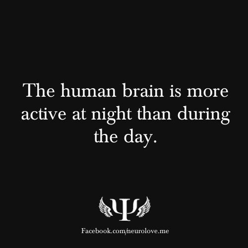 The human brain is more active at night than during the day.