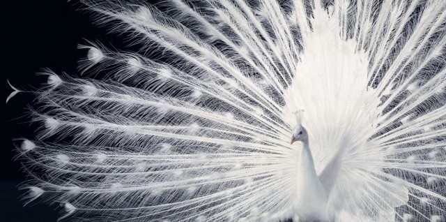 theanimalblog:  Photographer: Tim Flach