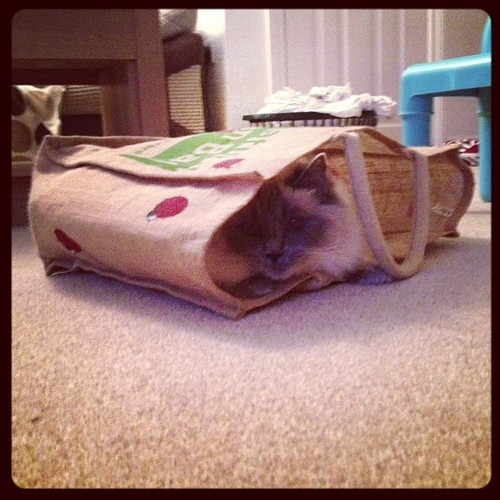 getoutoftherecat:  oh cat, you're not from Tesco, you cost £250.