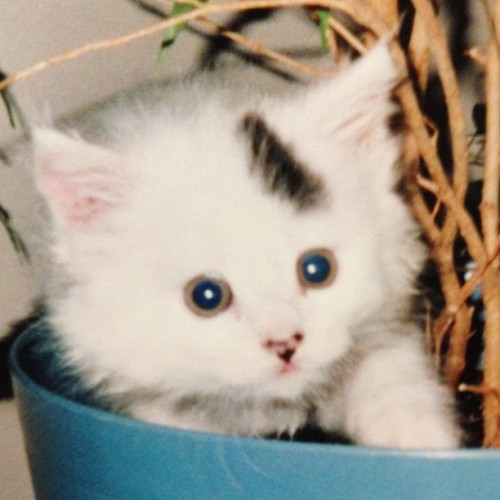 @virgilsson produced a snapshot of Smudge as a kitten. :)