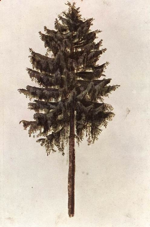 sisandmoon:  Albrecht Dürer  In the Pines