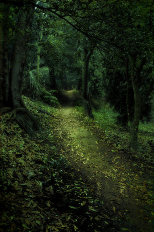 darkface:  Enchanted Forest 4 by =CathleenTarawhiti