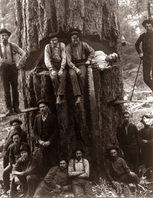 semilost:  Lumberjacks taken around 1901…