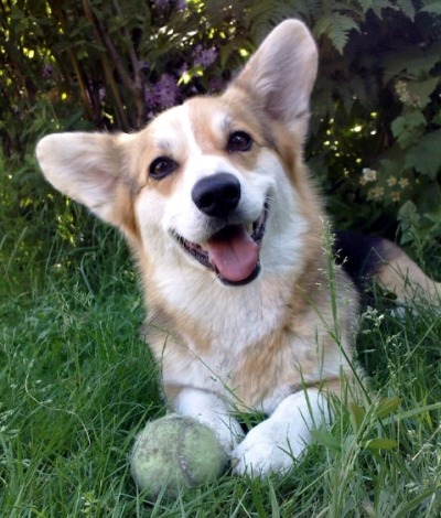 corgiaddict:  Allegro Pneumatic Sphere Consultants, Inc.
