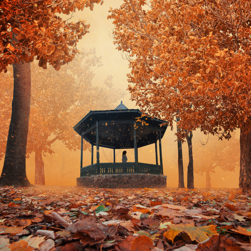 """Enclosure autumn"" by Caras Ionut"