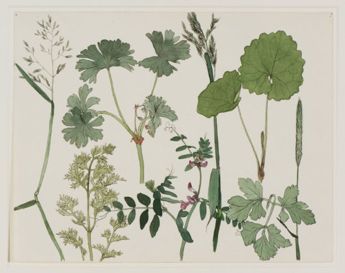 Dirk van Gelder Wild Plants (1925) pen, ink, watercolour (study for a litho of the same name). fletchingarrows:   delicate first growths FOLLOW FOR VEGETAL, VINTAGE, GRUNGIE