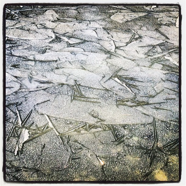 Thanksgiving ice.  (at Birds Of Vermont Museum)