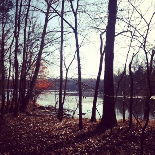 Lovely Thanksgiving walk (at Bledsoe Creek State Park)