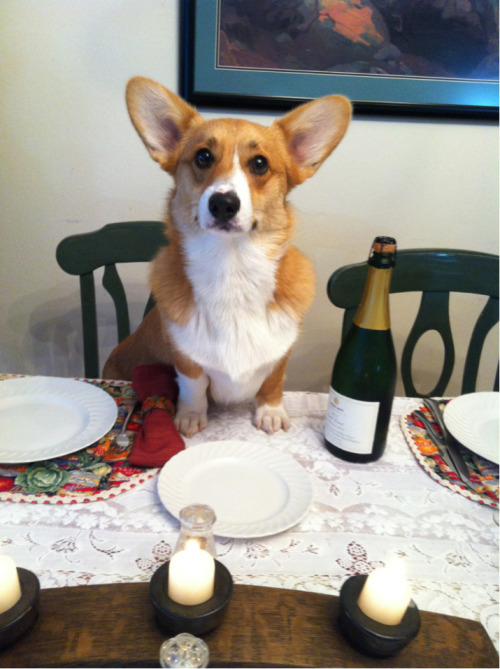 "ollieeveryday:  ""What do you mean I can't eat with you guys?"""