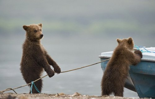 Us? Steal a Boat?  But we're bears! Seriously, scram.