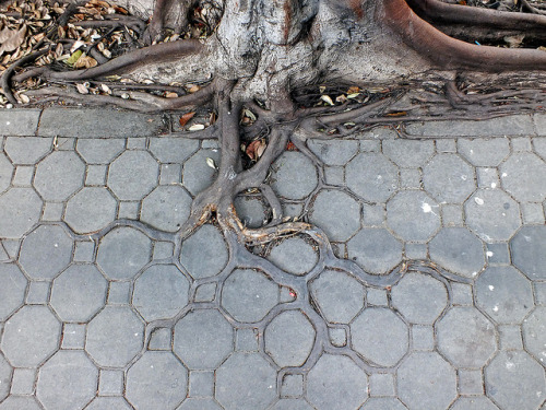 Pavement - Form Follows Groove by Horst Kiechle on Flickr.Tree root grows in pattern of paving stones. How beautiful! I always love the intersection of organic form and formal elegance.
