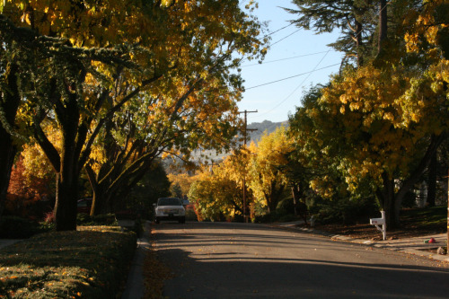 THE STREET WHERE I GREW UPDanville, CA©Laura Quick What I love about this neighborhood is that it is little changed from my childhood. Walking through the neighborhood this morning could only have been more perfect if the leaves on the ground were crunchy with frost. Still. Though you can never go home again, it's pretty damn close.