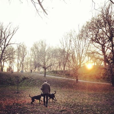 #Bellwoods #queenwest #Toronto #sunset #autumn #dog #park @morgancameronross  (at Trinity Bellwoods Park)
